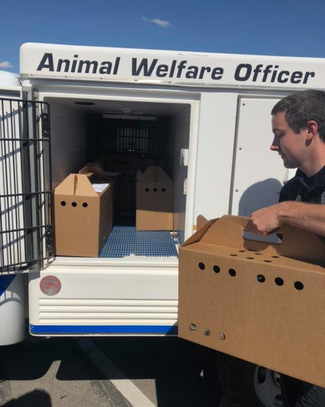 animal law enforcement officer loading animals in van