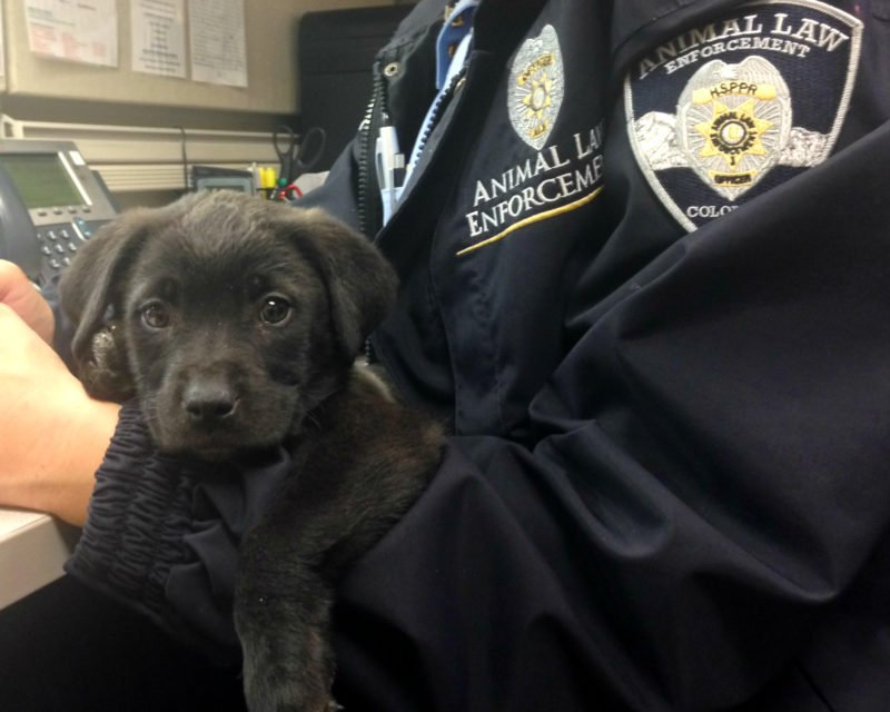 animal law enforcement officer holding small black puppy