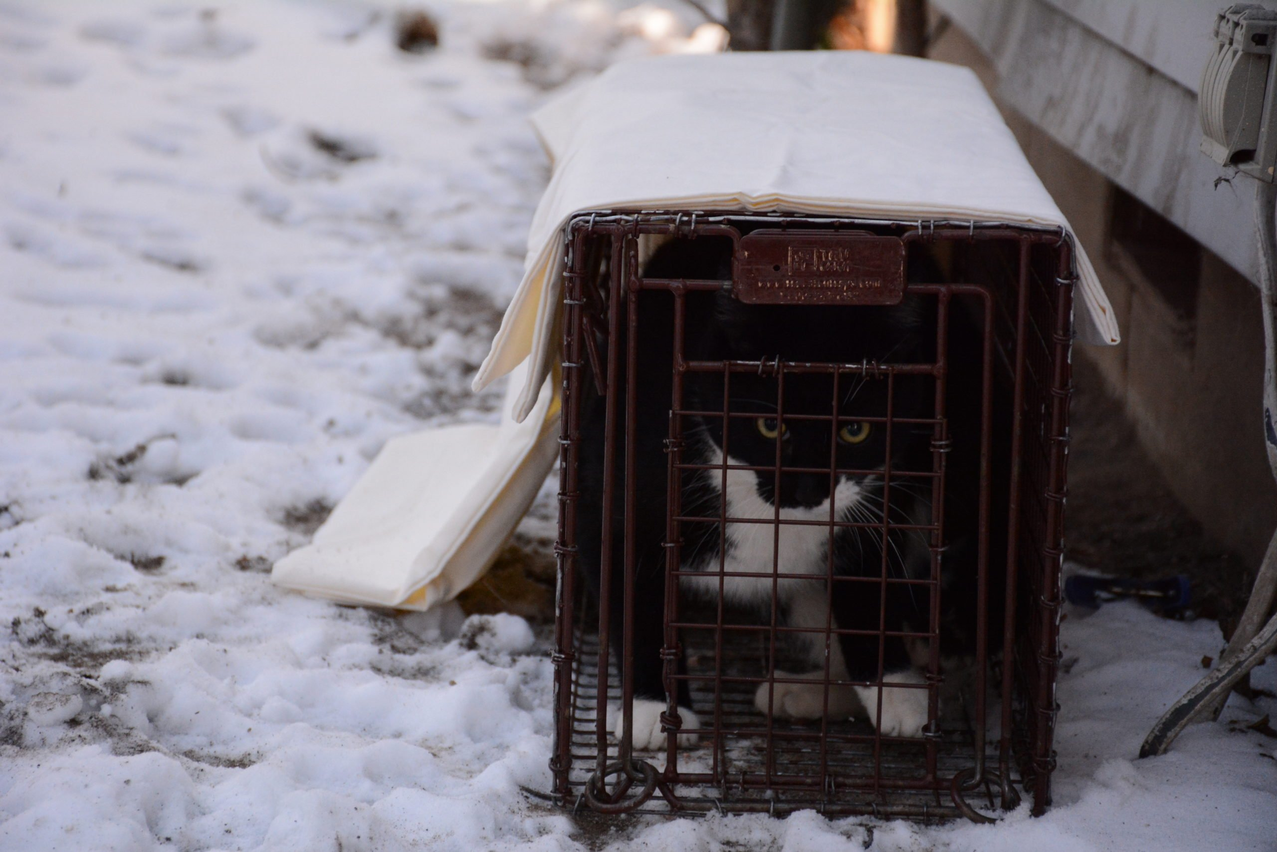 black and white cat in a carrier