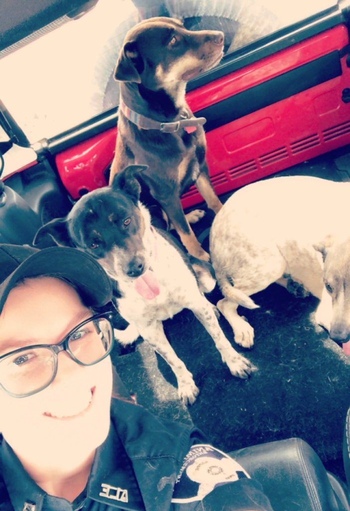 An HSPPR ALE Officer takes a selfie with three dogs in her truck